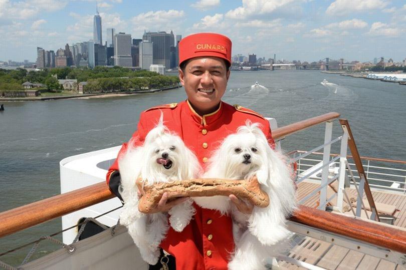 cunard, animaux en croisière sur le Queen Mary 2