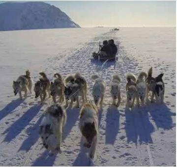 Lors de votre séjour en antarctique, Ponant vous offrira la possibilité de partir à la rencontre des étendues glacées via une randonnée en chiens de traîneau. Un moment privilégié avec les animaux et la flore locale.