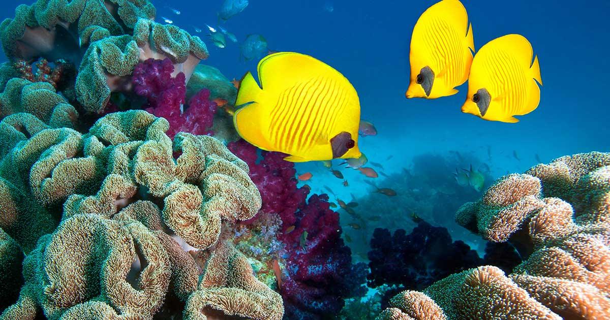 MSC s'associe afin de lutter contre la déforestation des recifs coralliens. Quand croisière rime avec environnement
